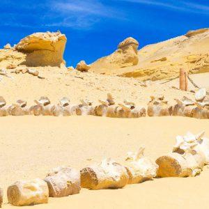 Wadi El Hitan & Desert Safari Tour From Cairo